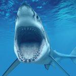 shark-diving-tours