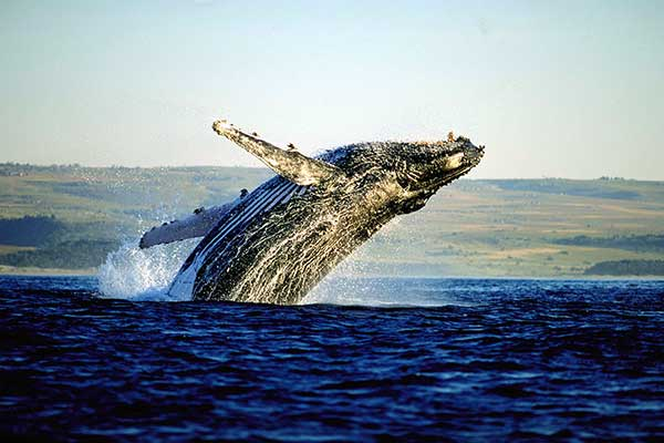 whale-watching---cape-town-tours