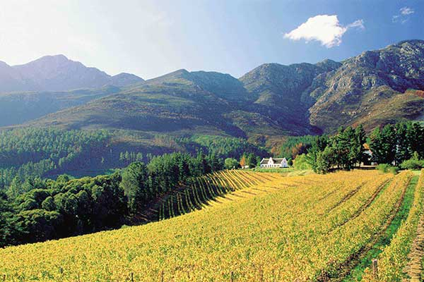 CAPE WINE TOUR