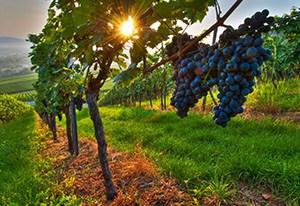 cape wine tours