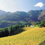 wine-tours---cape-town-tours