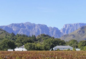 cape wine tours