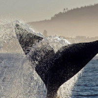Whale Watching Tour